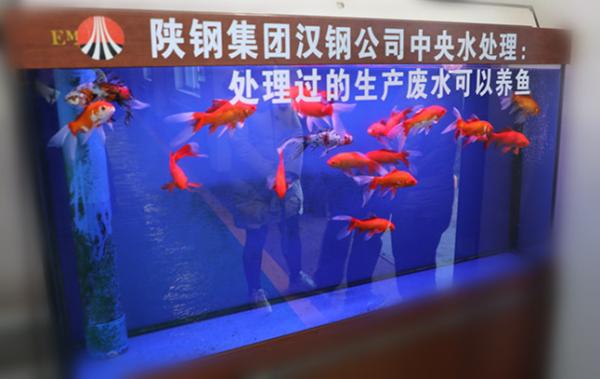 """快看,真的可以养鱼吖""""―中国钢铁新闻网"""